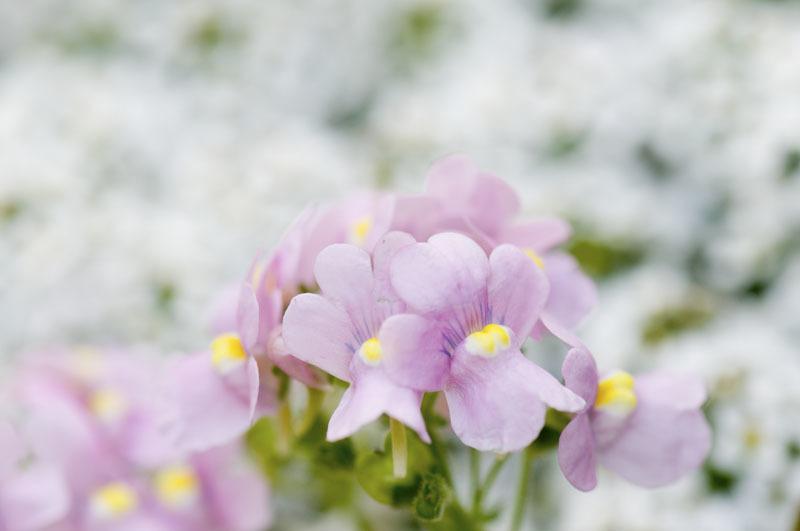 庭の花たち_e0367330_11014033.jpg