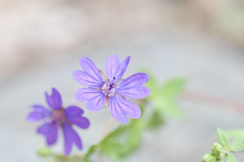 庭の花たち_e0367330_11093305.jpg