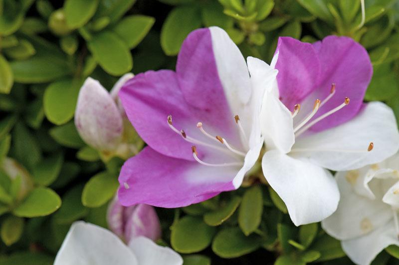 庭の花たち_e0367330_11120886.jpg