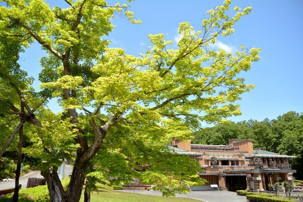 帝国ホテル中央玄関と青もみじ_e0373930_20591765.jpg