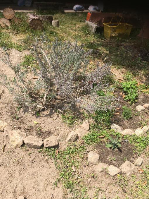 古い石垣が好きなんです。_f0182246_20525030.jpg