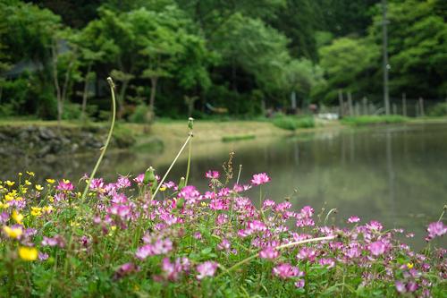 鯖寿司のみうら・・・オクヤマの琵琶湖と田んぼ生活_d0005250_1773193.jpg