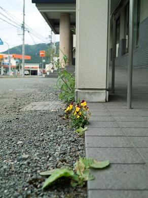鯖寿司のみうら・・・オクヤマの琵琶湖と田んぼ生活_d0005250_1791751.jpg