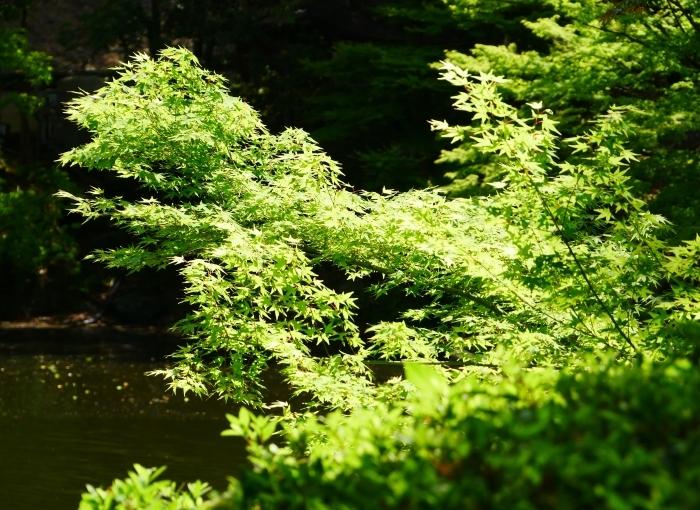 紅葉渓庭園にて  2020-05-20 00:00     _b0093754_22582773.jpg