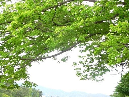 緑の賀茂川  _a0164068_22085641.jpg