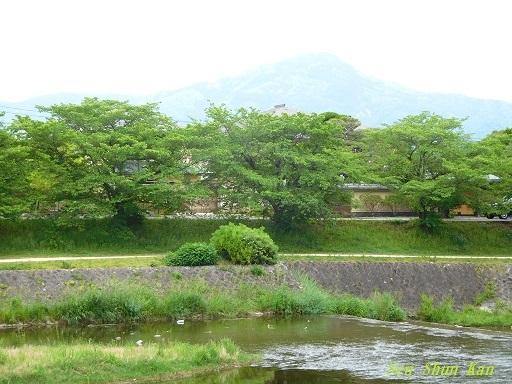 緑の賀茂川  _a0164068_22085647.jpg
