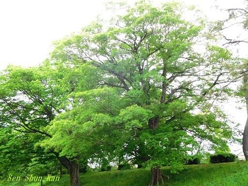 緑の賀茂川  _a0164068_22085697.jpg