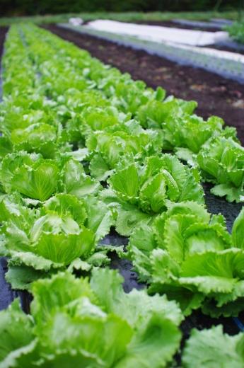 あと1週間!の予定の野菜たちの様子。_c0110869_19305652.jpg