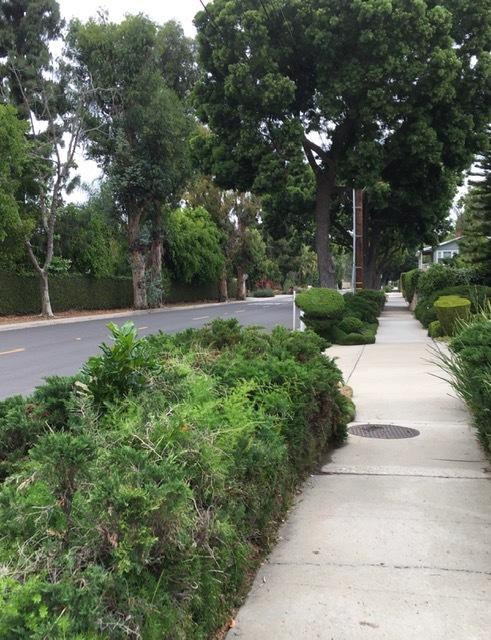久々の散歩、そして今年初めてのジャカランダ_e0350971_01274802.jpg
