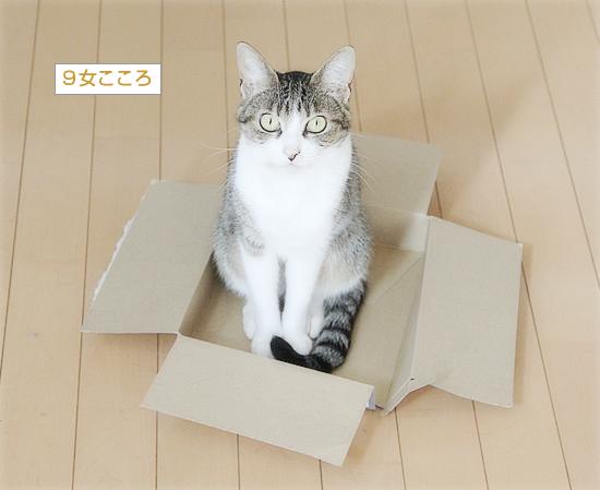 永遠の箱なんてない_a0389088_10194836.jpg
