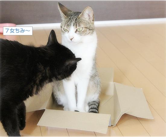 永遠の箱なんてない_a0389088_10211590.jpg