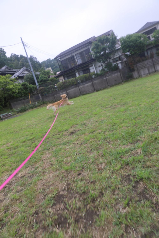 初めてのブーちゃんちのお庭♪_b0275998_11255189.jpg