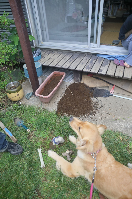 初めてのブーちゃんちのお庭♪_b0275998_11273270.jpg