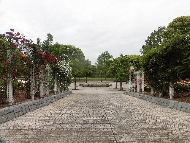 例年なら多くの人で賑わうはずが…満開のバラが切ない! 朝の散歩「中央公園コース」_f0141310_07405926.jpg