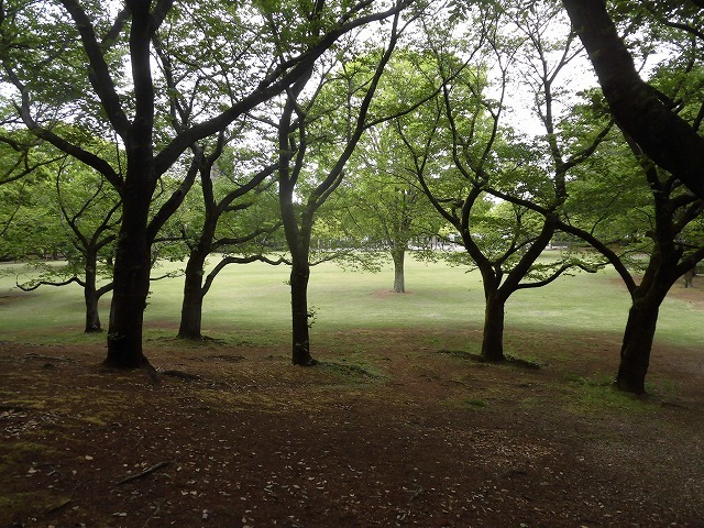 例年なら多くの人で賑わうはずが…満開のバラが切ない! 朝の散歩「中央公園コース」_f0141310_07411828.jpg