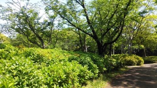 【新緑】_f0215714_16162034.jpg