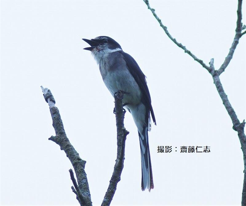やんばるの鳥たち_f0121321_15535306.jpg