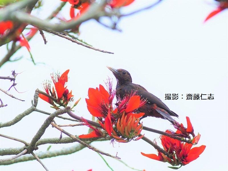 やんばるの鳥たち_f0121321_15535322.jpg
