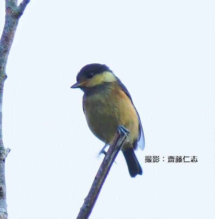 やんばるの鳥たち_f0121321_15535396.jpg