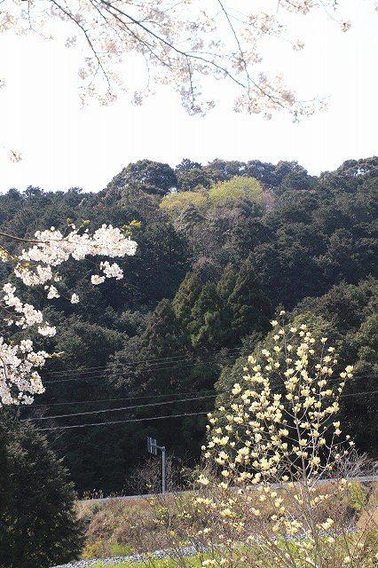 馬瀬・船津の桜散策(撮影:4月8日)_e0321325_11180190.jpg