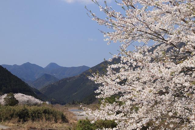 馬瀬・船津の桜散策(撮影:4月8日)_e0321325_16200141.jpg