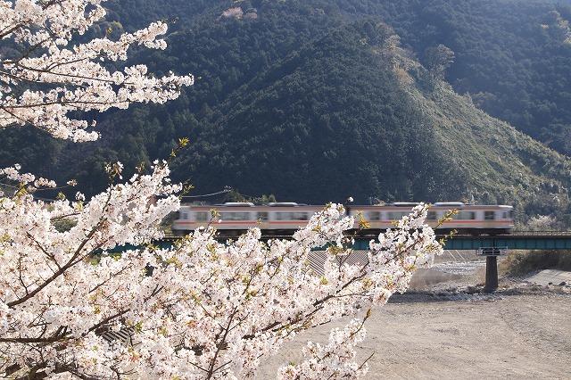 馬瀬・船津の桜散策(撮影:4月8日)_e0321325_16212559.jpg