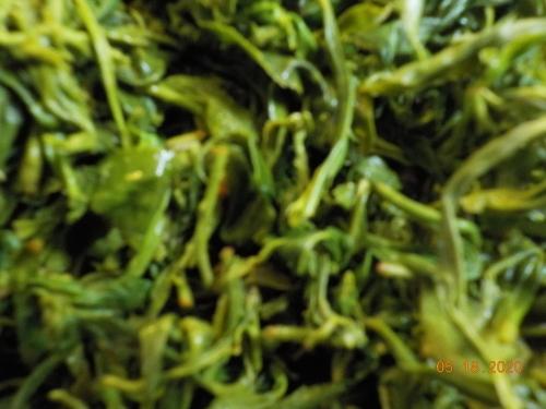 Canada産の日本茶収穫_a0173527_10410149.jpg