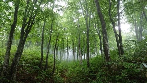 森林セラピーロード整備_f0140327_17403759.jpg