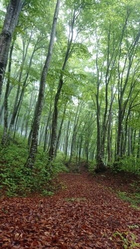 森林セラピーロード整備_f0140327_17410383.jpg