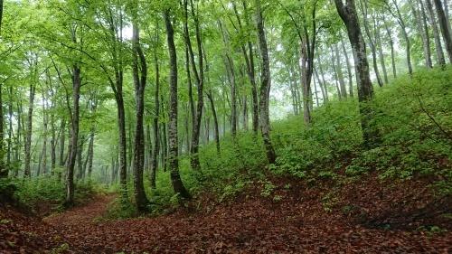 森林セラピーロード整備_f0140327_17413021.jpg