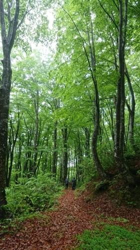 森林セラピーロード整備_f0140327_17414820.jpg
