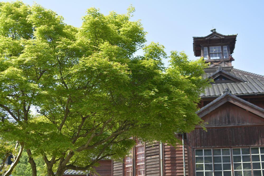 金沢監獄と青もみじ_e0373930_19475805.jpg