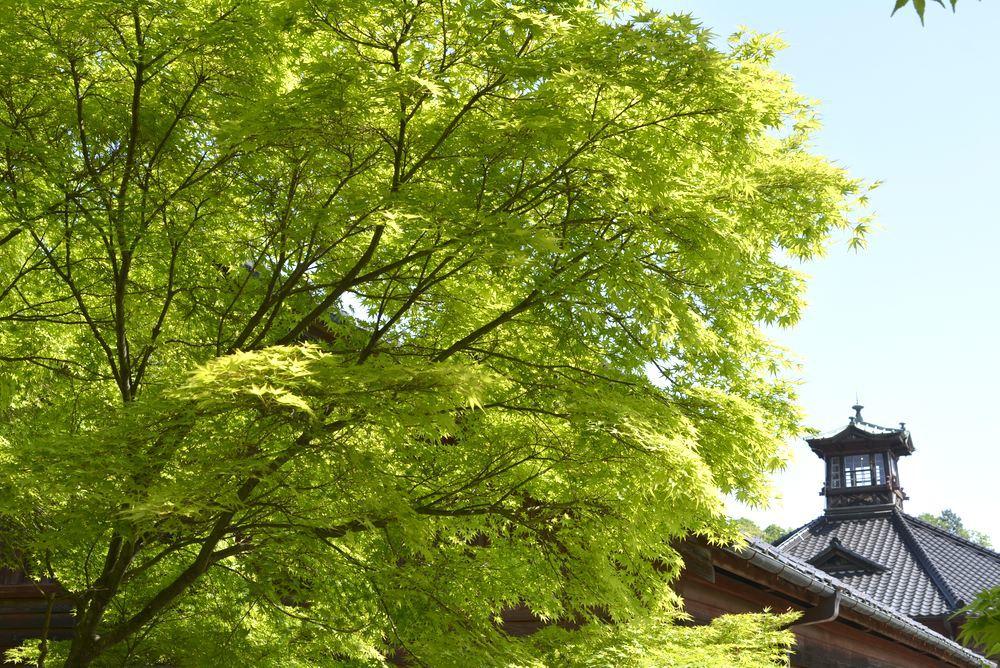 金沢監獄と青もみじ_e0373930_19475901.jpg