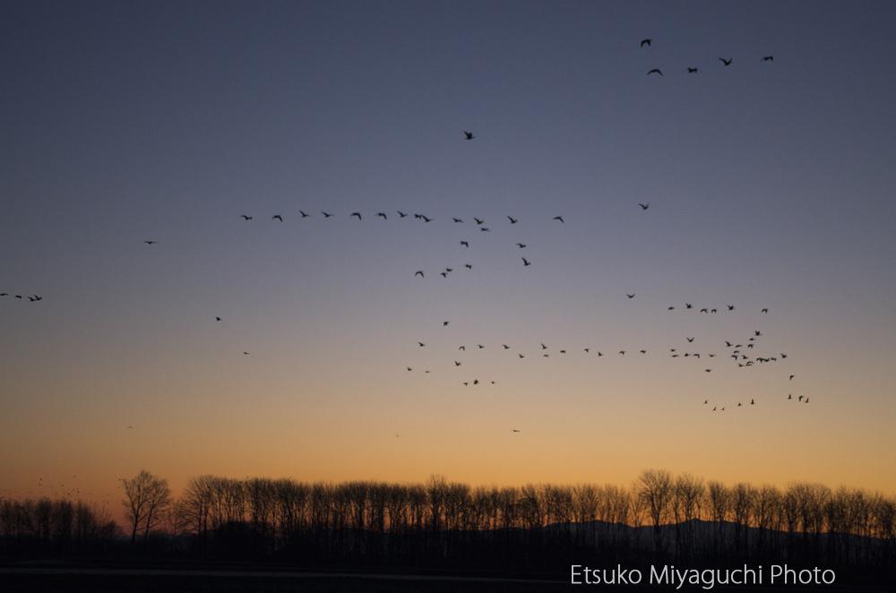 3月の渡り鳥_f0152939_17525040.jpg
