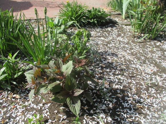 黒船のカステラが届いた&庭のお花が綺麗_a0279743_10283991.jpg