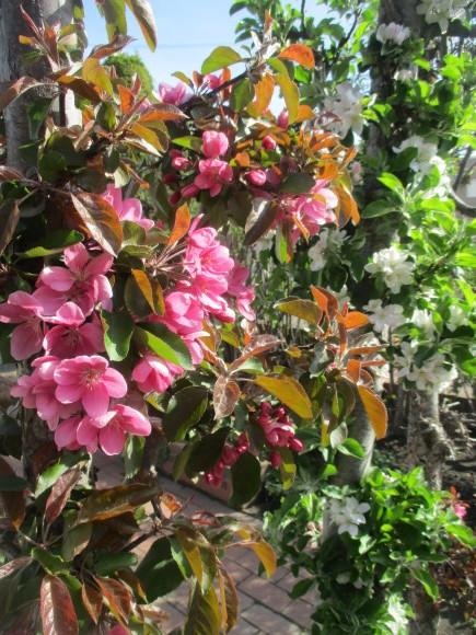 黒船のカステラが届いた&庭のお花が綺麗_a0279743_10285248.jpg