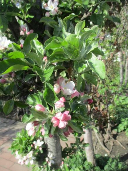 黒船のカステラが届いた&庭のお花が綺麗_a0279743_10290555.jpg