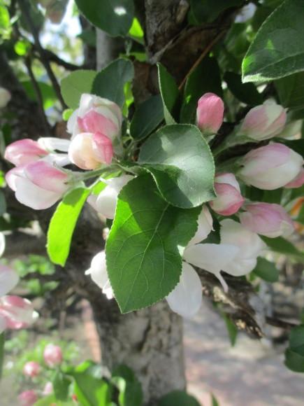 黒船のカステラが届いた&庭のお花が綺麗_a0279743_10292817.jpg