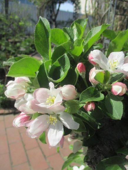 黒船のカステラが届いた&庭のお花が綺麗_a0279743_10294431.jpg
