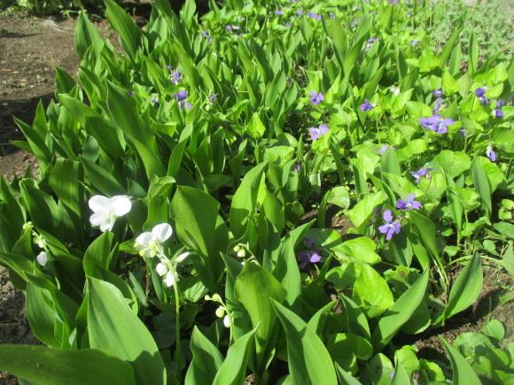 黒船のカステラが届いた&庭のお花が綺麗_a0279743_10301770.jpg