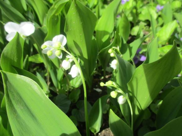 黒船のカステラが届いた&庭のお花が綺麗_a0279743_10303669.jpg