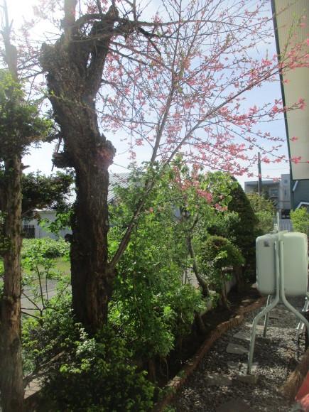黒船のカステラが届いた&庭のお花が綺麗_a0279743_10305791.jpg