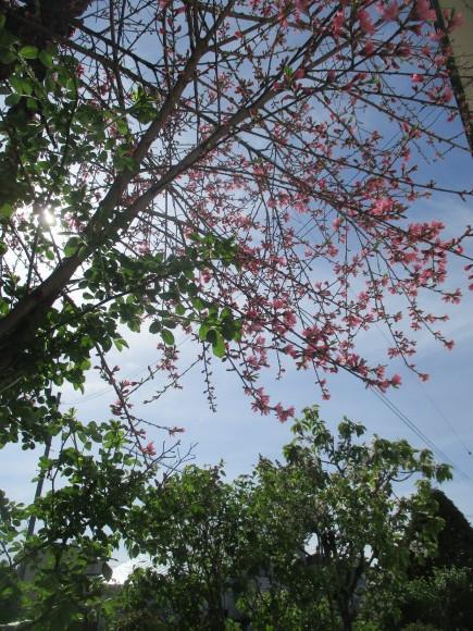 黒船のカステラが届いた&庭のお花が綺麗_a0279743_10311057.jpg