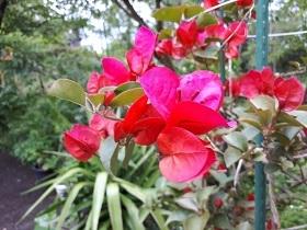 【雨上がりの花達】_e0093046_18131959.jpg