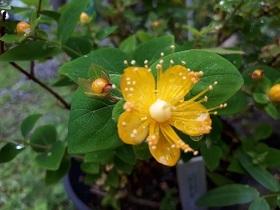 【雨上がりの花達】_e0093046_18133124.jpg
