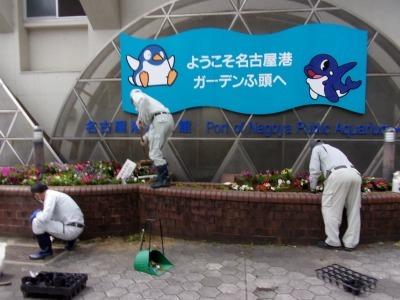 ガーデンふ頭総合案内所前花壇の植替えR2.5.18_d0338682_14135255.jpg