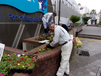 ガーデンふ頭総合案内所前花壇の植替えR2.5.18_d0338682_14165755.jpg