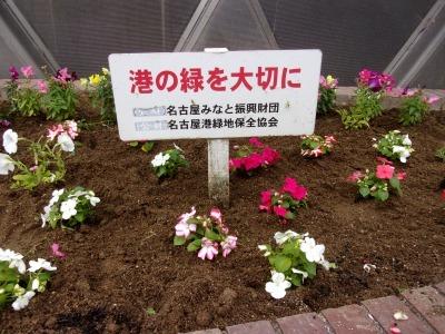 ガーデンふ頭総合案内所前花壇の植替えR2.5.18_d0338682_14174559.jpg