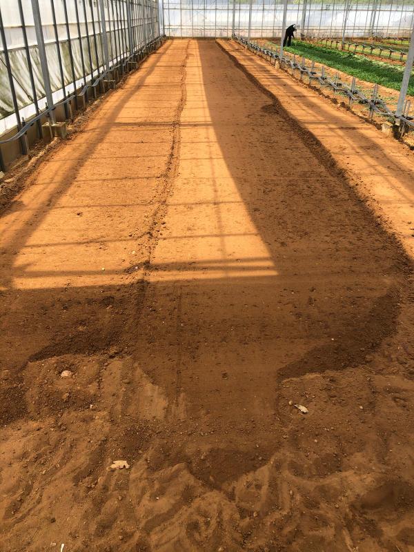 土耕栽培のリーフとハーブ_b0176185_18163547.jpg