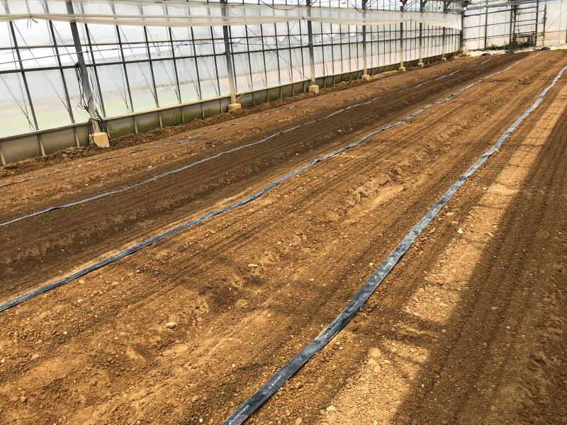 土耕栽培のリーフとハーブ_b0176185_18164123.jpg